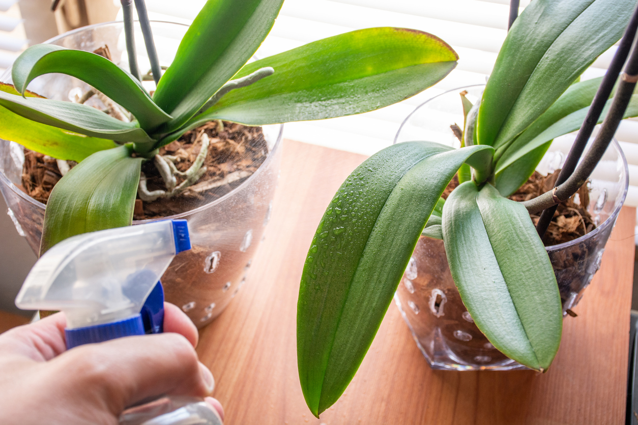 A quick spritz of water is one of the only things many houseplants need (Getty)